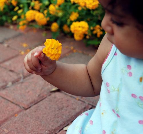 Baby-Girl-Holding-flower-in-hand